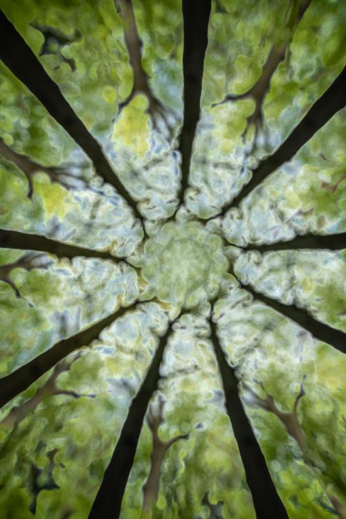 Vage boomkruinscène met reikende takken die op vingers lijken