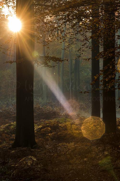 Zonsopgang in het bos in de herfst met flare
