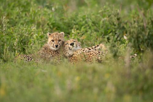 Best photographic trips to Tanzania in Africa with www.ingridvekemans.com