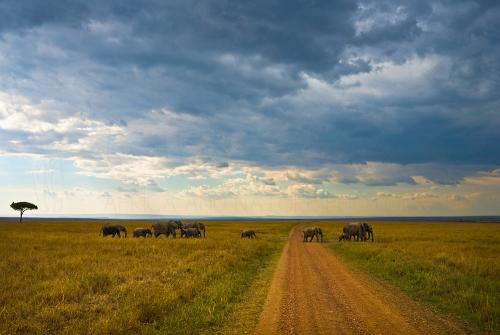 Elephant herd with babies crossing Masai Mara landscape under cloudy sky, Kenya, Africa.