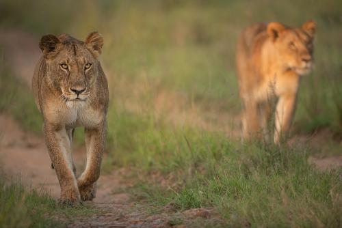 Beste fotoreizen naar Afrika en de migratie met www.ingridvekemans.com