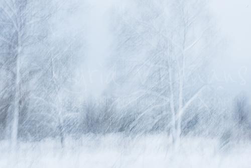 Wintersfeer in het bos