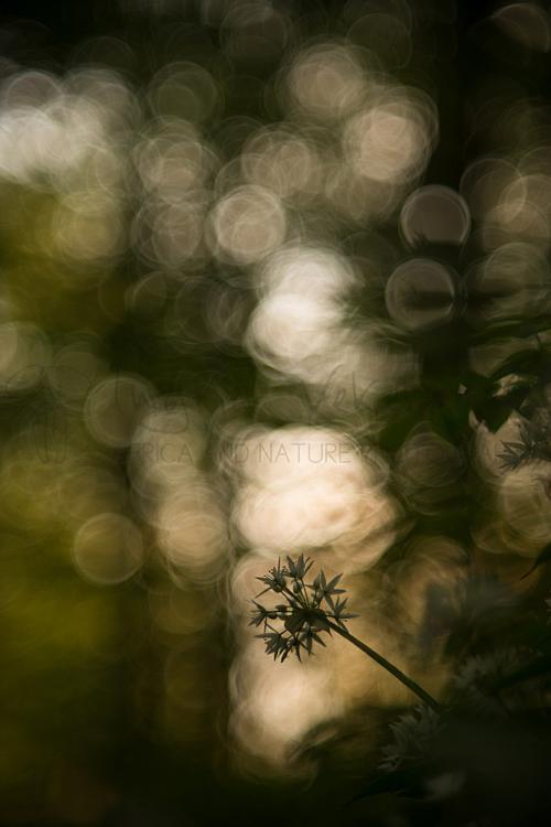 Daslook in het bos bij zonsondergang