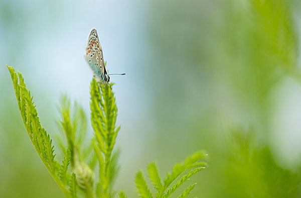 Blauwtje met gesloten vleugels op groene plant tegen een lichtblauwe achtergrond