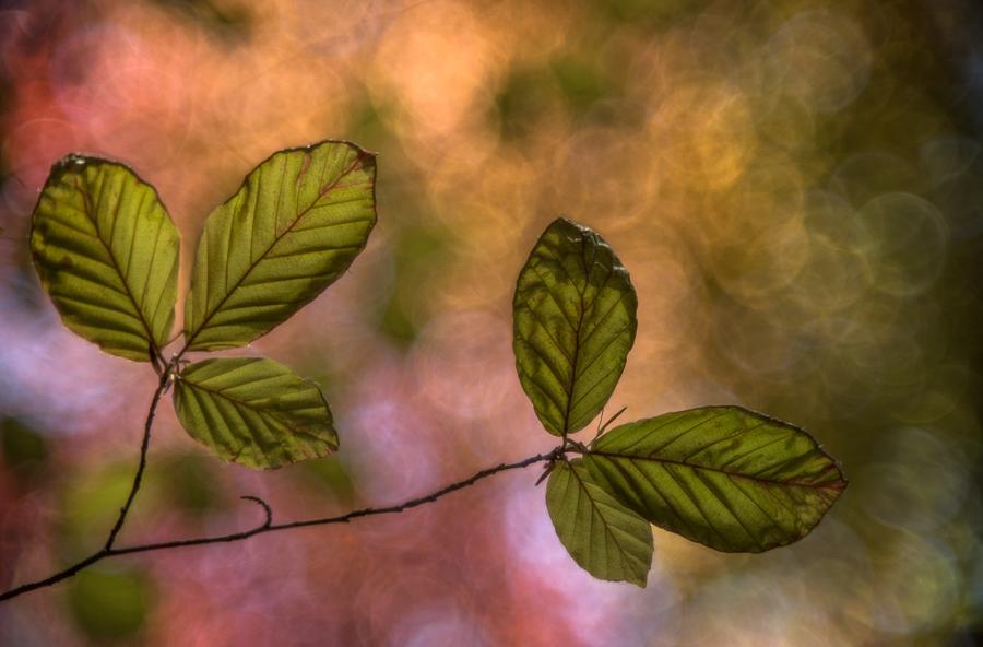 Workshop creatieve natuurfotografie in het bos met Ingrid Vekemans