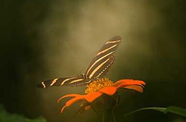 Close-up van tropische vlinder